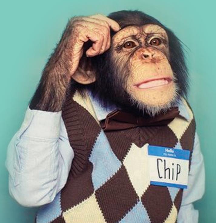chiimp big desktop - Hello Free Audit