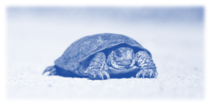 Image showing a very slow moving tortoise to show that slow things can be really annoying - page load speed is a very big deal and making your website as fast as possible should be one of your top priorities