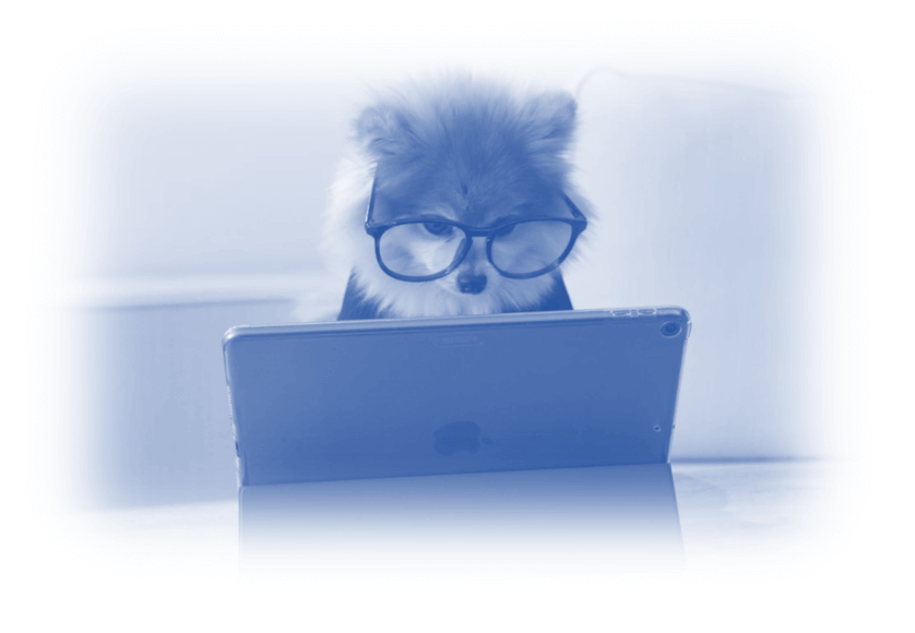Image showing a dog with business glasses on working at a laptop - Google Ads vs Microsoft Ads – What are the key differences